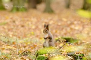 Autumn in wood by XanaduPhotography