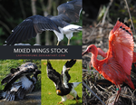 Wings stock by Ladyperfume