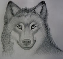 Realistic Wolf Sketch- Mark Crilley by foreverstrawberries