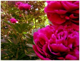 secret pink by froet