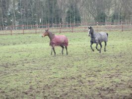 Rocky and Jack playing by ponychops