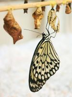Rice Paper Butterfly by Argolith