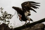 Vulture by Dinus1979