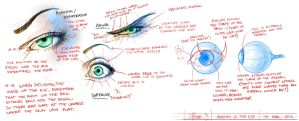 Eye anatomy study by TheWizpir