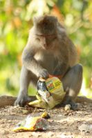 monkey with his food by JUanDavin