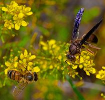 Wasp and Bee by boron
