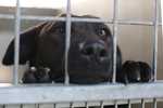 East Valley Animal Shelter 26 by Deliquesce-Flux