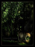 Jungle Camoflauge by Goodbye-kitty975