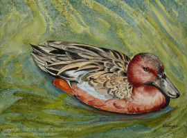 Cinnamon Teal by Kamakru
