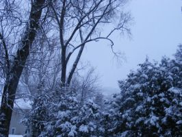 Feb 16 And 17th Winter Storm 2 by BlueIvyViolet
