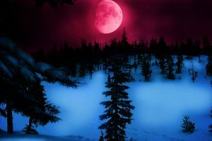 Red Winter. by Darxen