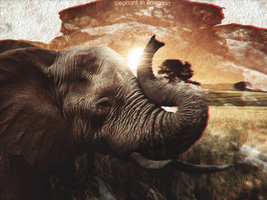 Elephant in Savanna by RonaldVQZ