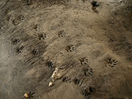Footprints in the mud 2 by canis7