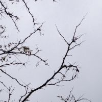 Branches by LordSinrath