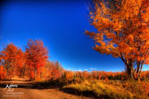 HDR Autumn Tree 2 by Nebey