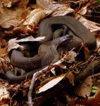 Snake! by LadyPhotographer492