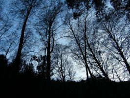 Night falls in the woods by RavenA938