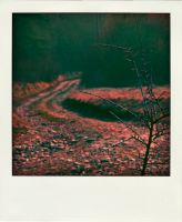 Poladroid Roads 06 by DpressedSoul