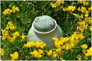 Box in the garden III by ClaireBriant