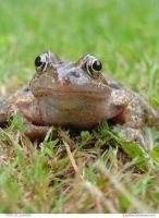 FROG 02_quaddles by quaddles