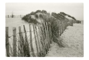 Marram Grass by Talkingdrum