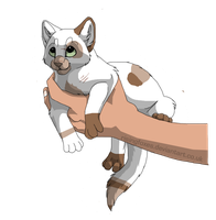 Cat adoptable 14 -CLOSED- by Black-pond-adopts