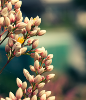 Bunched. by 48photography