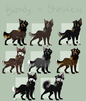 Brandy x Sharpless litter [ONE LEFT] by blackunia