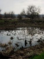 Free Stock Photo - Swampy Landscape #2 by croicroga