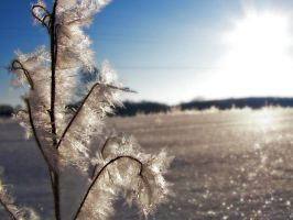 Winter Frost 3 by S-H-Photography