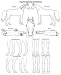 Equine Markings Worksheet by Murasaki99