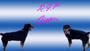 RIP Gipper by deviantdonswife