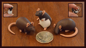 Set of 3 Dime Rats ~ LittleWolfeh Commission by nEVEr-mor
