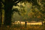 Early Autumn by ncphotojunkie