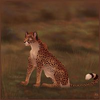 What do you See Cheetah by balaa