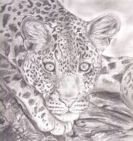 Leopard by Toiger