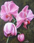 Pink orchids by SamanthaJordaan