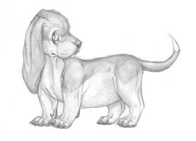 Basset drawing by spicylemur