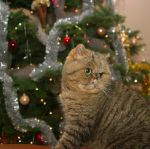 Holiday Cat by Merder40