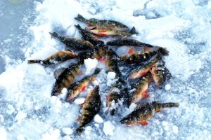 Iced Perch by ManicMechE