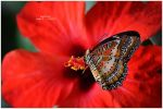 Julie's butterfly VI by timelesscolors