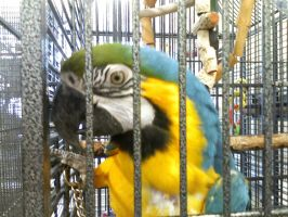 rescue Isis by parrots4life