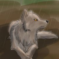 Wolf in the rain by Wolfdog27