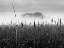 Fog Tails by Omega300m