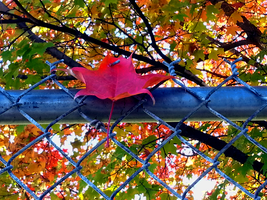 Fall 2015 Regal Elementary - Leaf on a Fence by Ryven