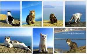 Cats and sea by Mari-Ghostly