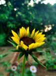 Young and Beautiful by satyam9999