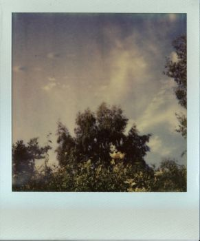 Trying out polaroids by tilsley