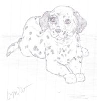 Dalmatian Puppy Sketch by caitiedidd