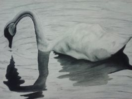 Peaceful Swan by DemonRed6
